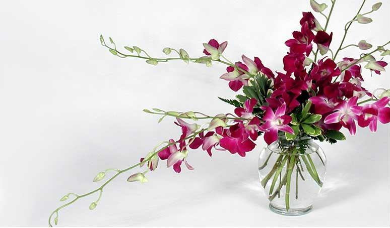 The season's best florals and gifts from Schmitt's Florist, your flower shop in Louisville
