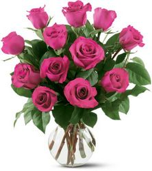 12 Hot Pink Roses In Louisville, KY, In Kentucky, Schmitt's Florist