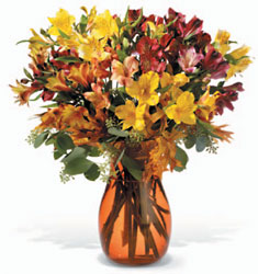 Alstroemeria Brights In Louisville, KY, In Kentucky, Schmitt's Florist