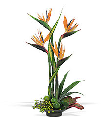 Bird of Paradise In Louisville, KY, In Kentucky, Schmitt's Florist