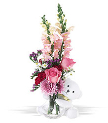 Teleflora's Bear Hug In Louisville, KY, In Kentucky, Schmitt's Florist