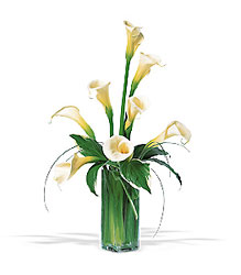White Callas In Louisville, KY, In Kentucky, Schmitt's Florist