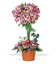 Alstroemeria Topiary In Louisville, KY, In Kentucky, Schmitt's Florist