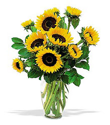 Shining Sunflowers In Louisville, KY, In Kentucky, Schmitt's Florist